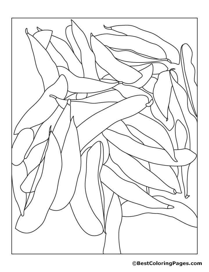 soybeans coloring pages