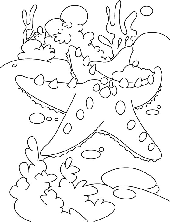 Starfish at rest coloring pages