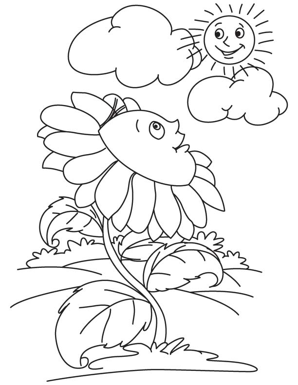 Sunflower looking at sun coloring page
