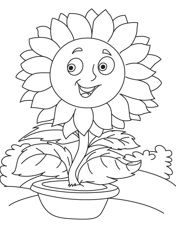 Sunflower pot coloring page