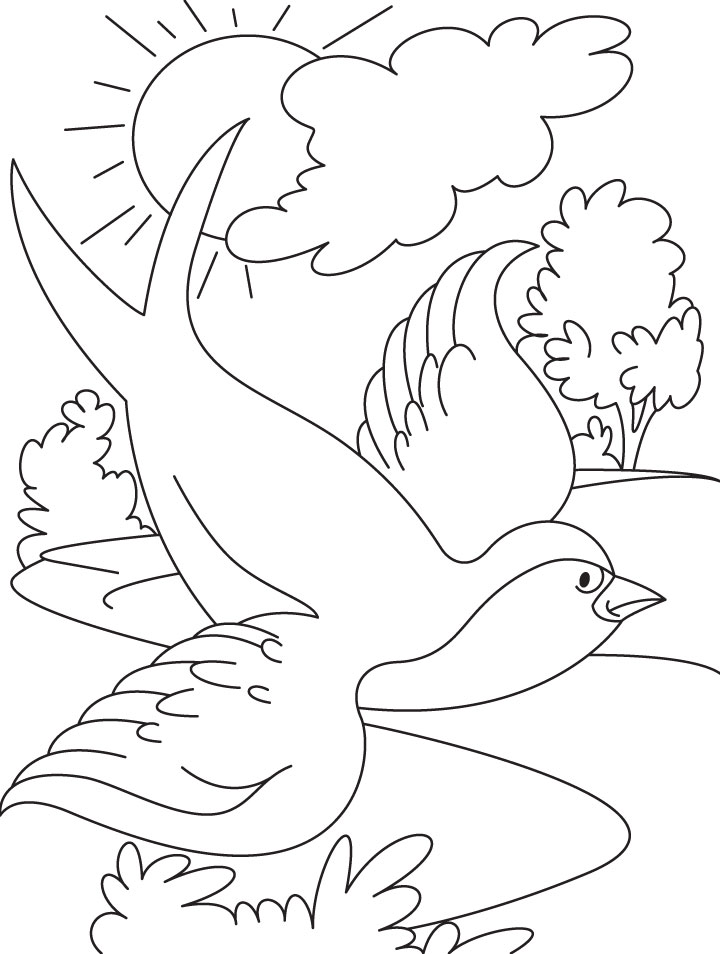 Swallow bird flying coloring page