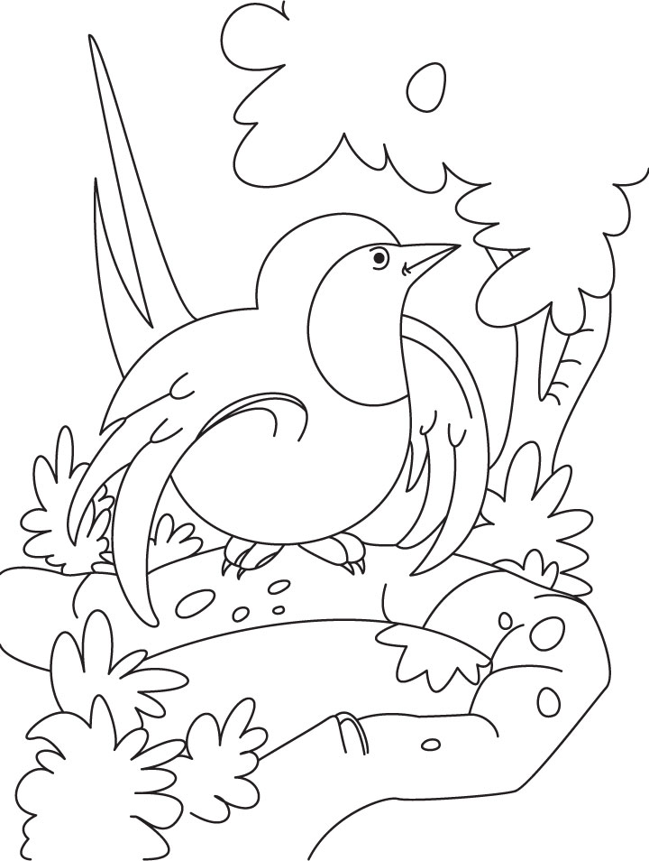 A curious swallow bird coloring page Download Free A