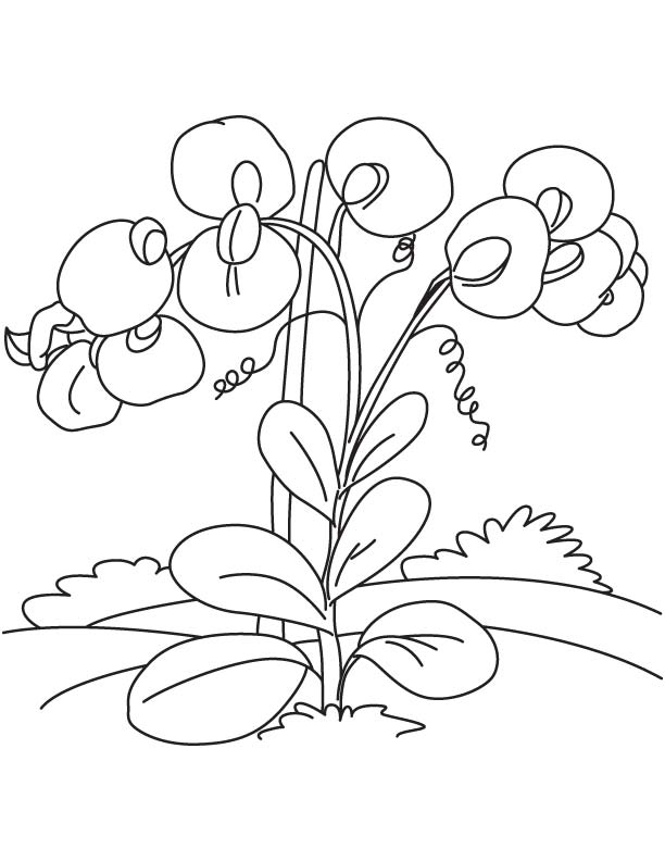 princess and the pea coloring page. sweet pea flowers coloring page princess and the