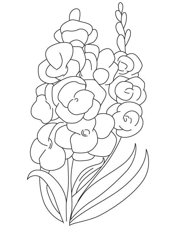 Sword lily coloring page