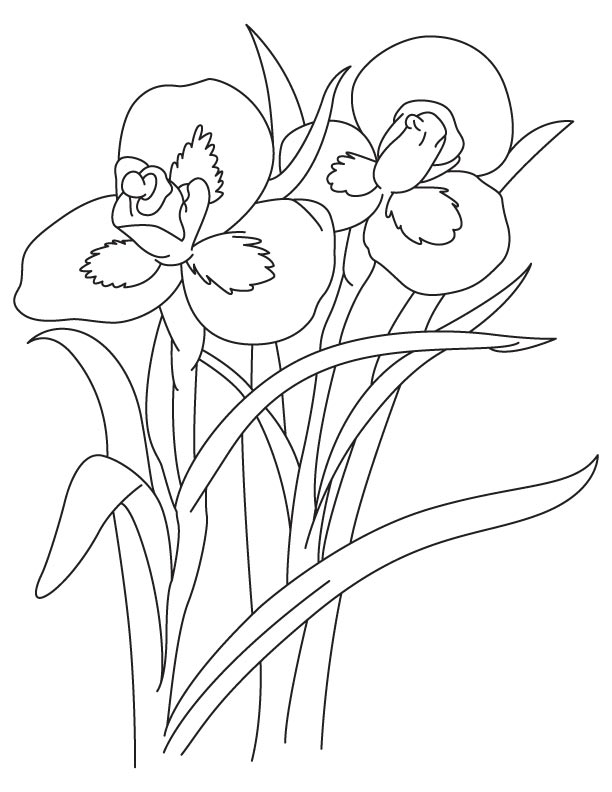 Tall Iris Flower Coloring Page