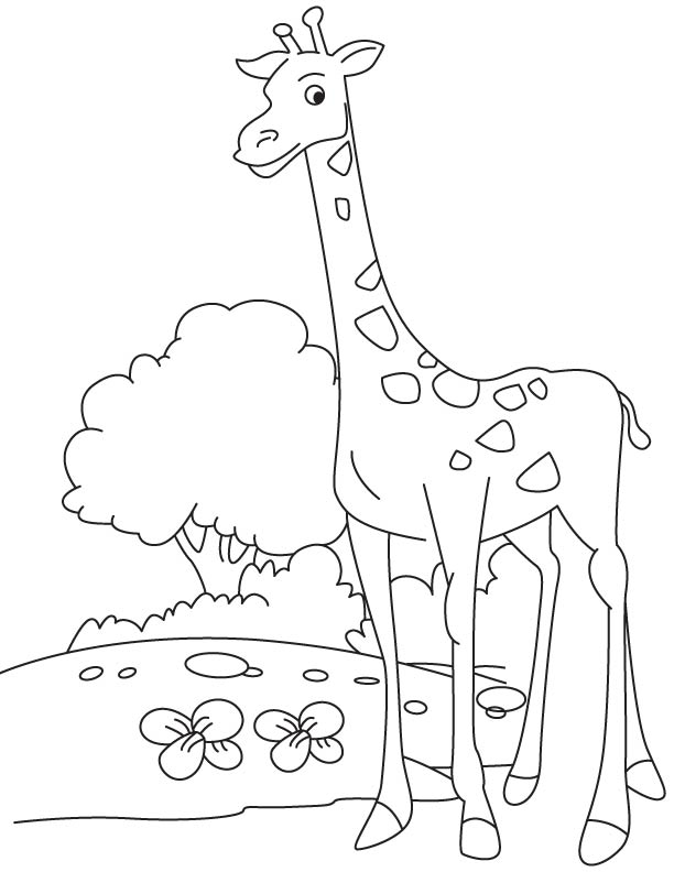 Tall giraffe calf coloring page