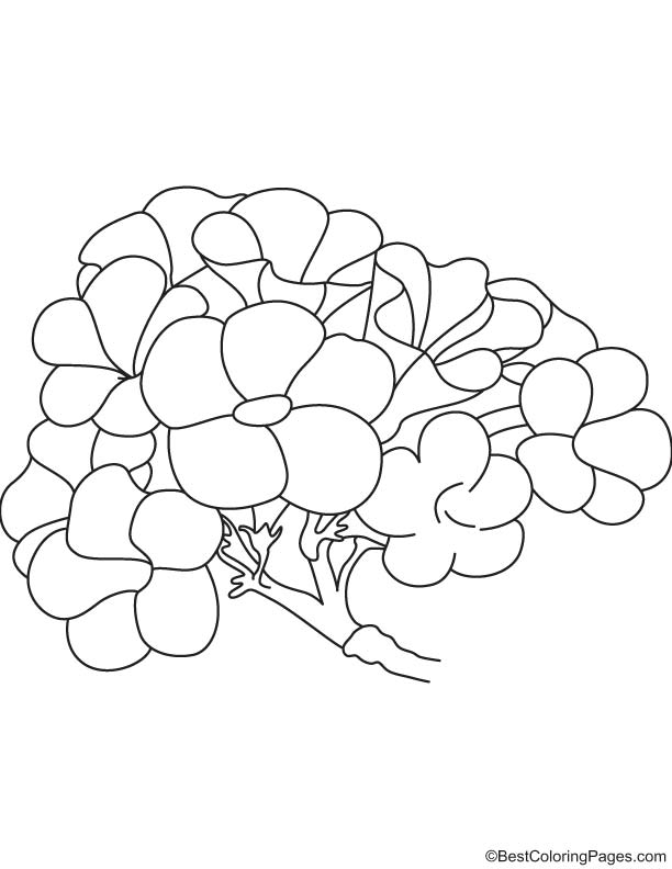 Tecoma chrysostricha national flower of Brazil