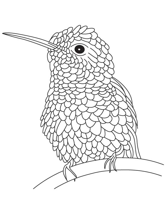 Textured hummingbird coloring page
