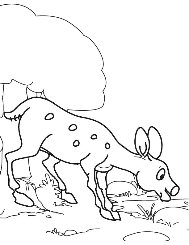 The thirsty deer coloring page