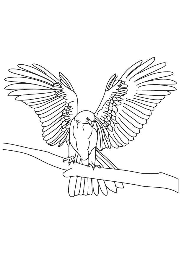 falcon coloring pages - photo#20