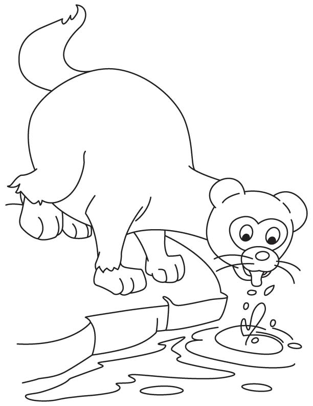 Thirsty ferret coloring page | Download Free Thirsty ferret coloring ...