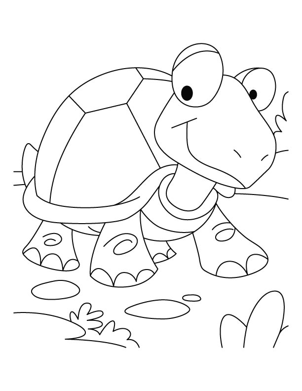 Tortoise won the race coloring pages