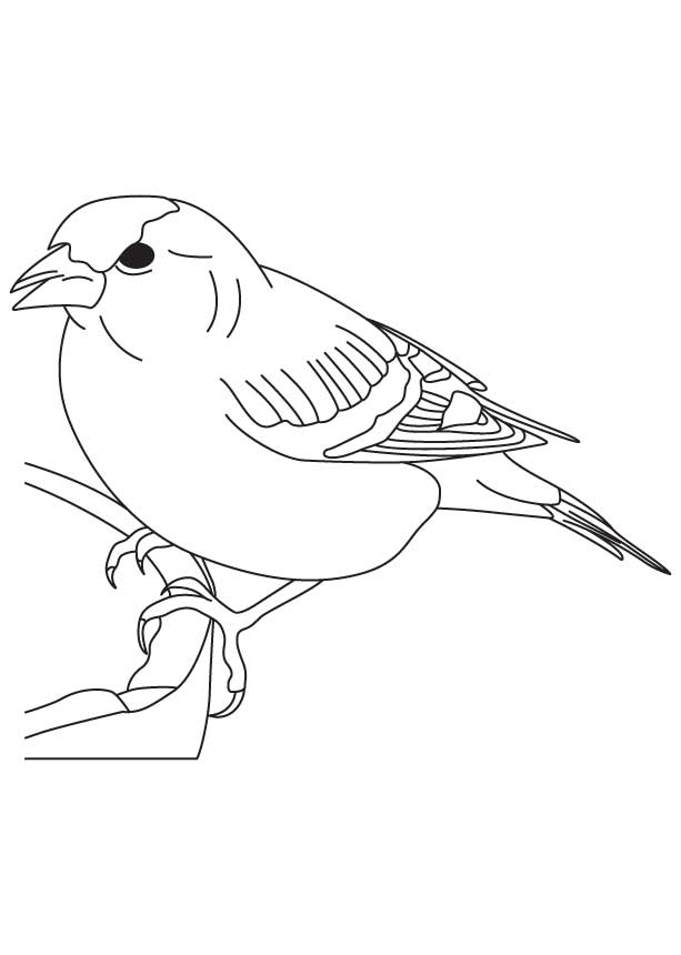 True Finch Bird Coloring Page