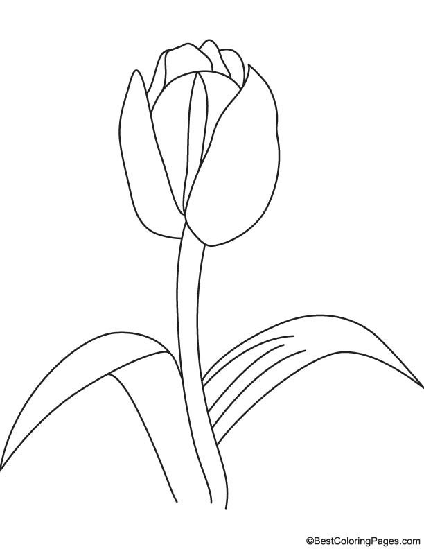 Tulip Bulb Coloring Page Download Free Tulip Bulb Coloring Page For Kids Best Coloring Pages