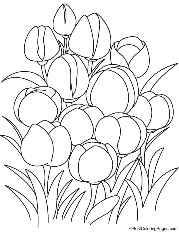 Tulip Flowers Coloring Page Download Free Tulip Flowers Coloring Page For Kids Best Coloring Pages