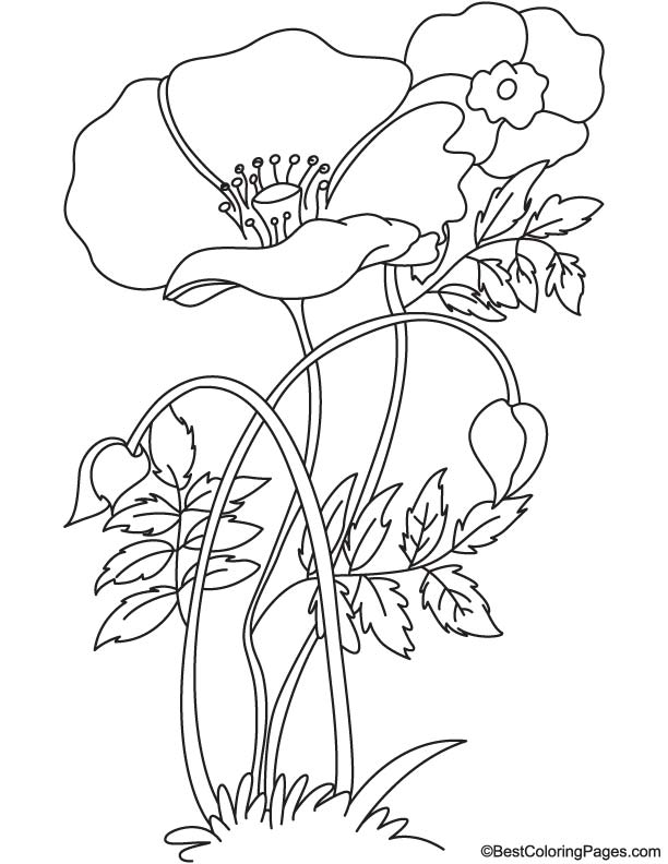 Tulip poppy coloring page