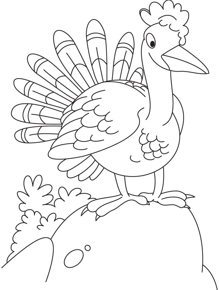 Curious turkey coloring page