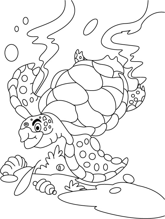 Turtle searching something coloring pages Download Free Turtle