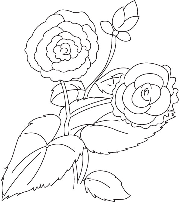 Two begonia with bud coloring page