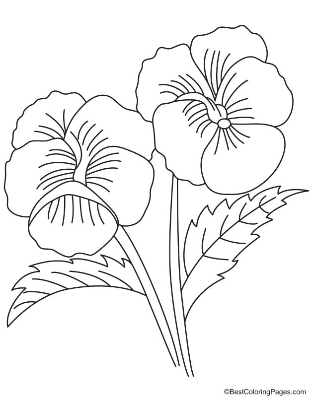 Two big pansy coloring page