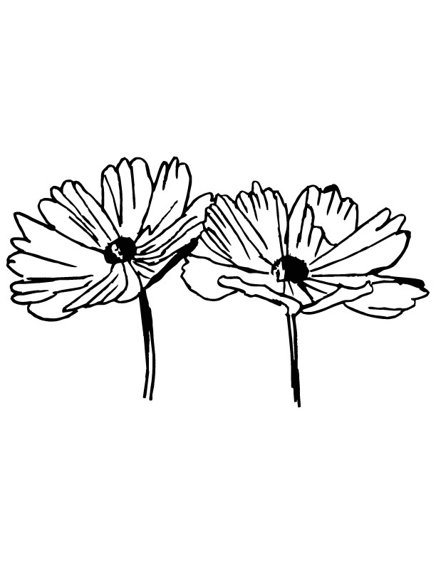 Two cosmos flower coloring page