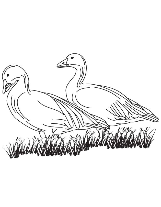 Two Geese Coloring Page