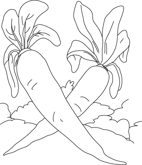 radishes colouring pages