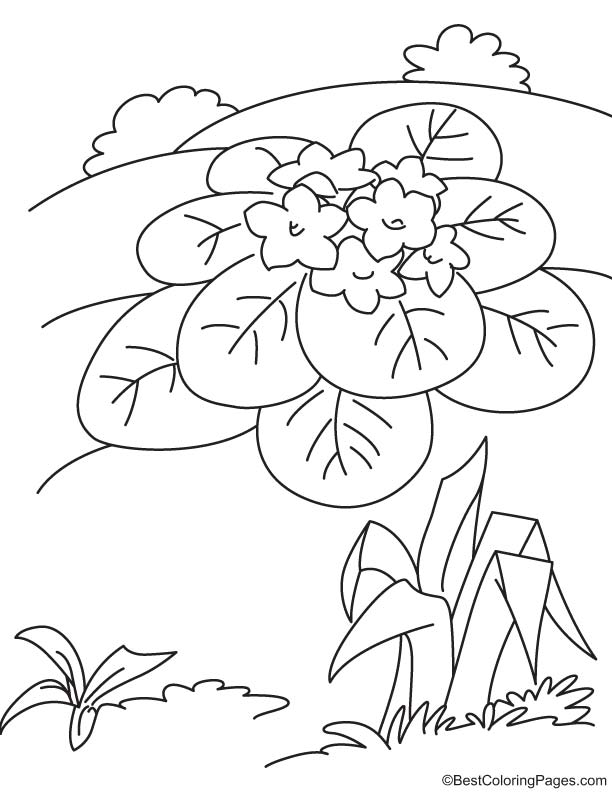 Violet flower coloring page | Download Free Violet flower ...