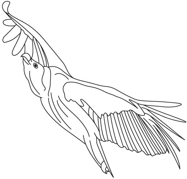 Vulture in the sky coloring page | Download Free Vulture in ...