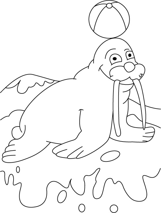 Ball on walrus terrace coloring pages Download Free Ball on