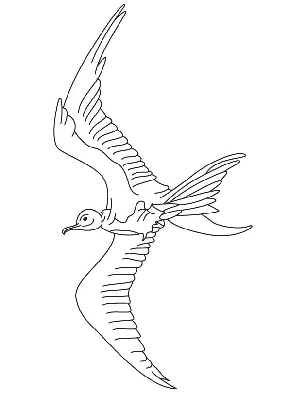 War bird coloring page