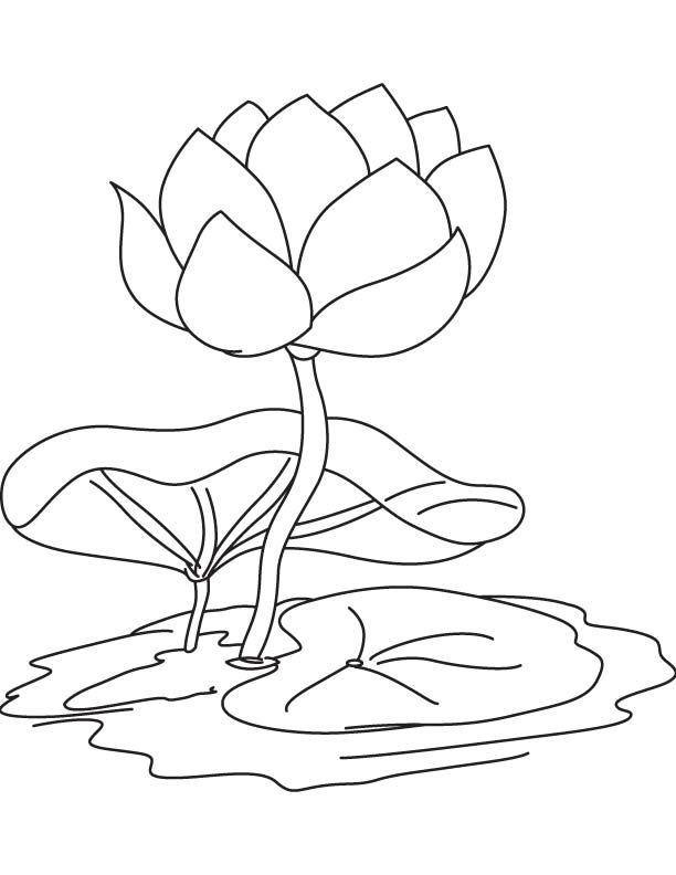 Water Lily Flower And Pad Coloring Page