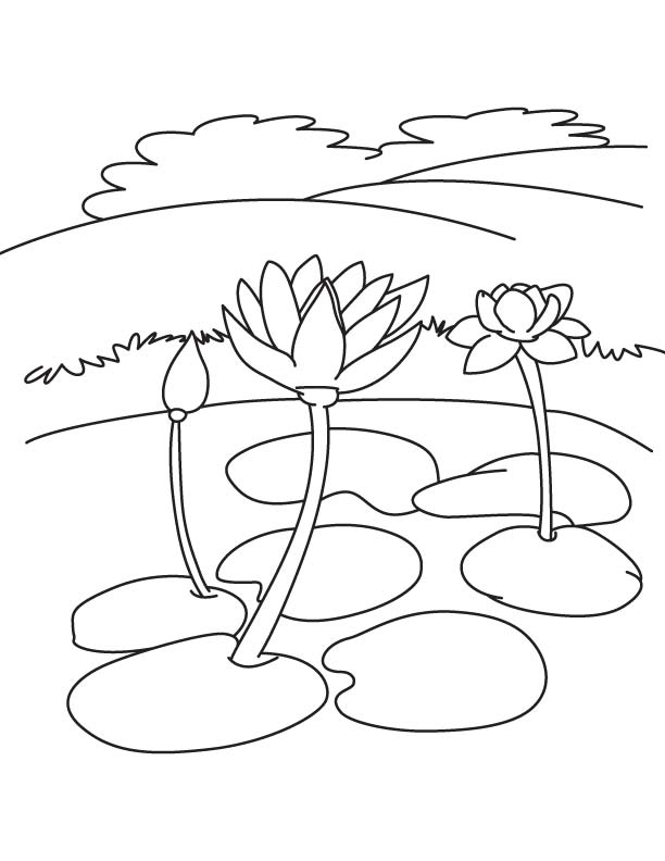 Water Lily Flowers Coloring Page