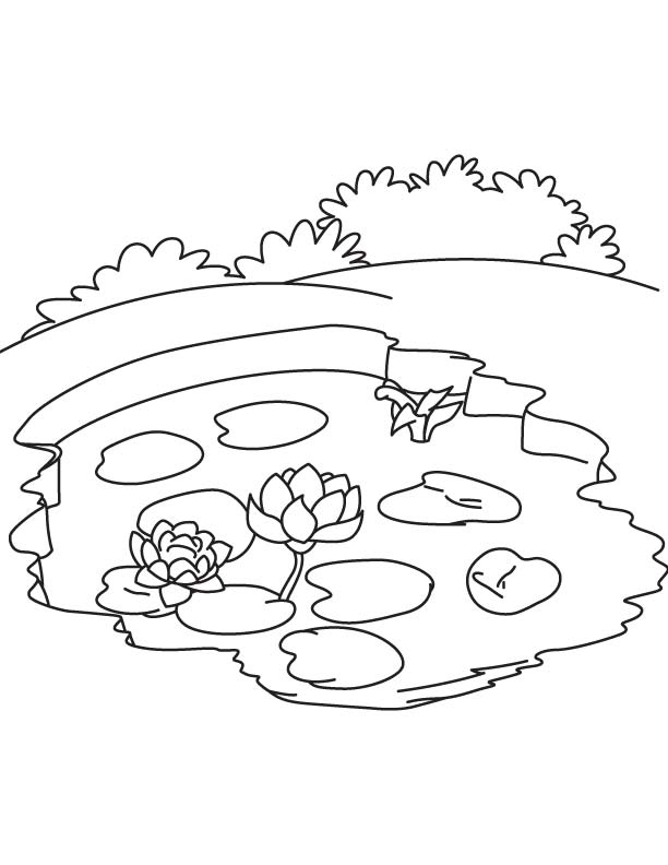 Water lily in pond coloring page | Download Free Water lily in ...
