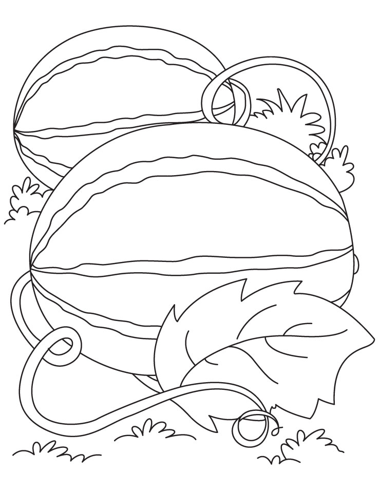 Watermelon growing on the ground coloring page | Download Free ...