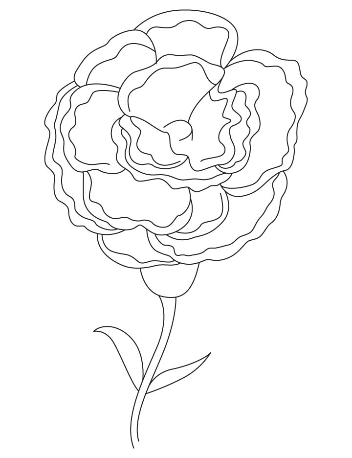 carnation coloring pages - photo#20