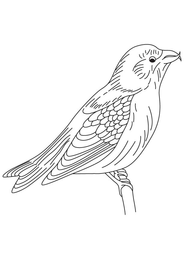 red winged blackbird coloring pages - photo#4