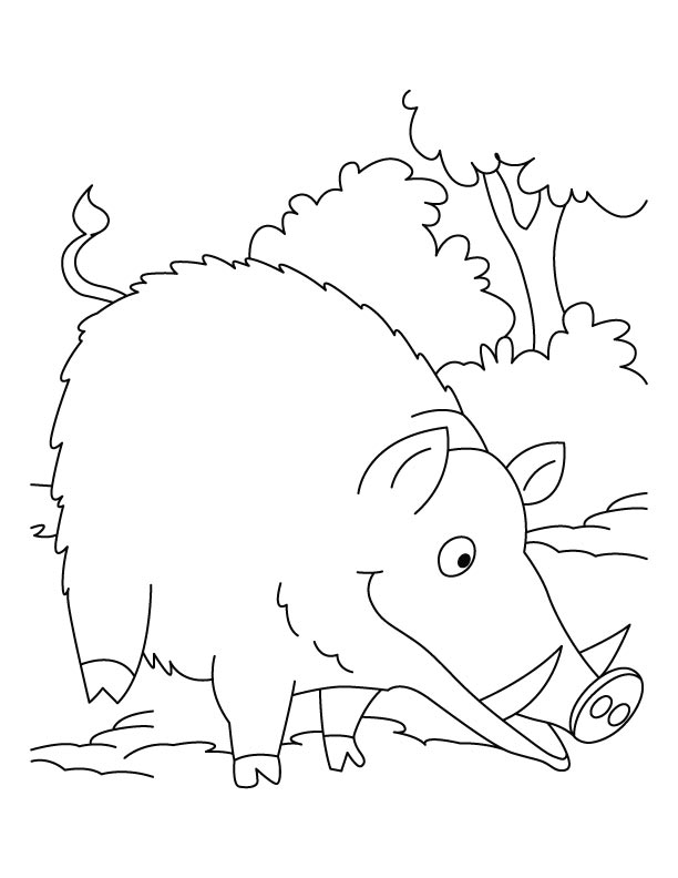 Wild Boar searching food coloring pages