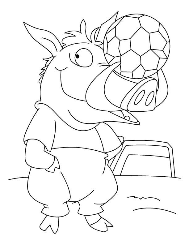 Wild Boar gear up for match coloring
