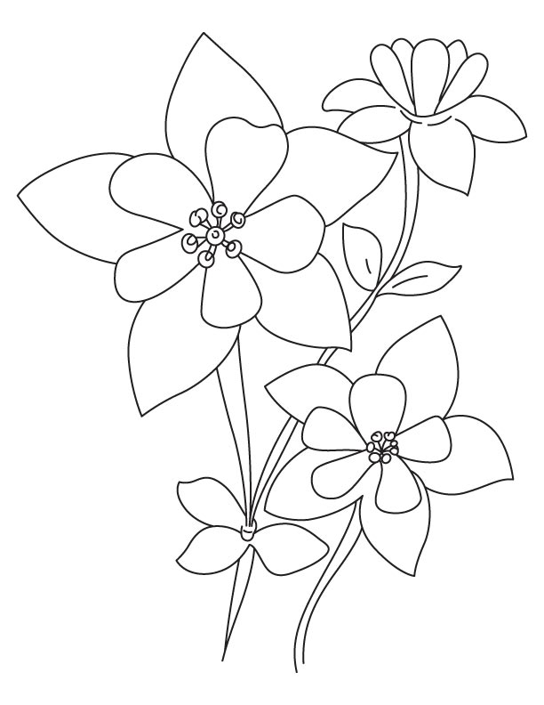 Wild columbine flower coloring page