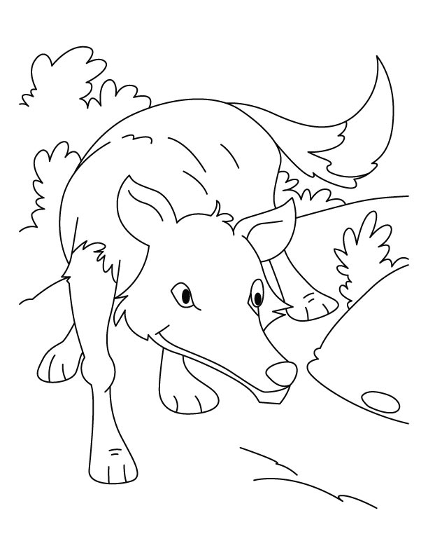 Wolf ready to hunt coloring pages
