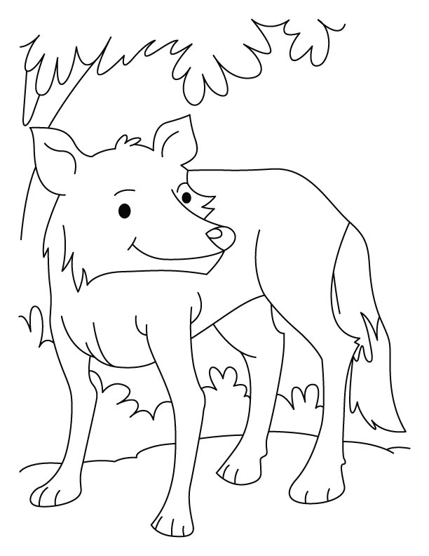A fully grown wolf coloring pages  Download Free A fully grown