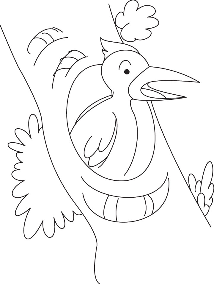 Woodpecker looking for food coloring page  Download Free