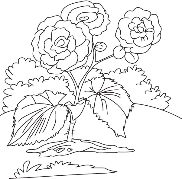 Yellow begonia coloring page