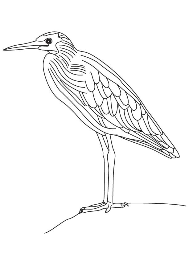 Yellow bittern coloring page