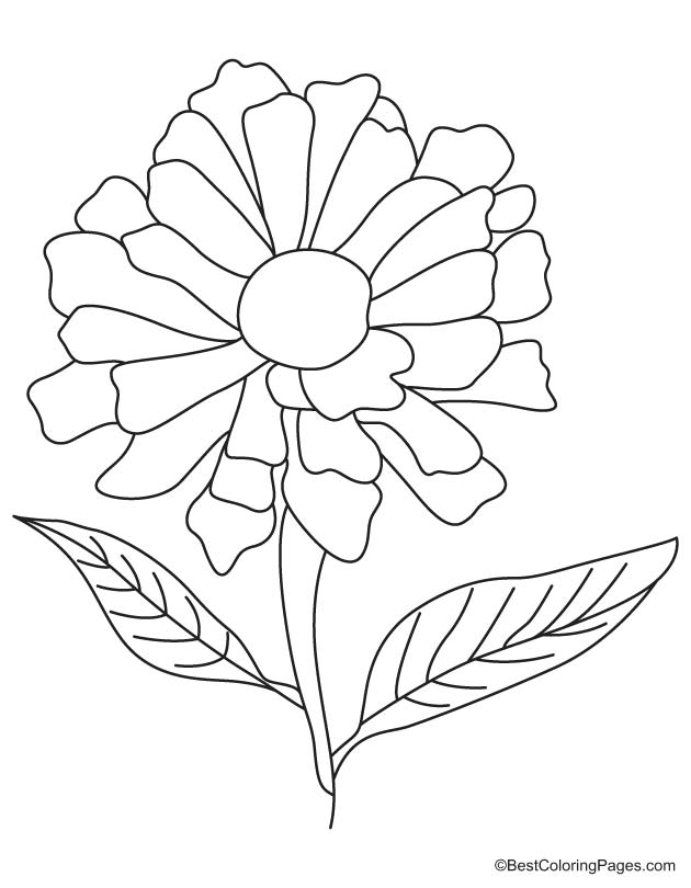 yellow zinnia coloring page