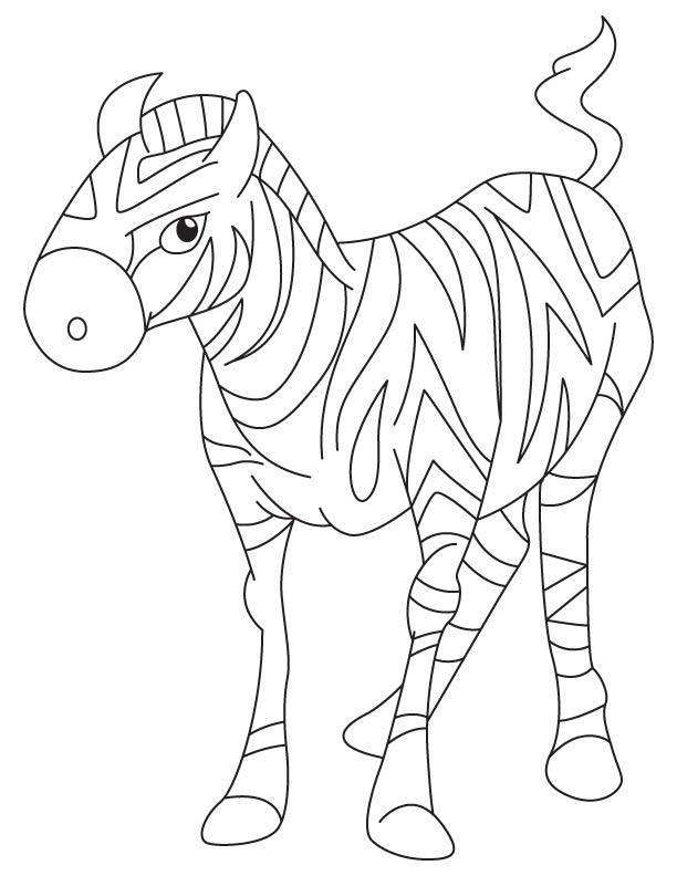 Zebra colt coloring page