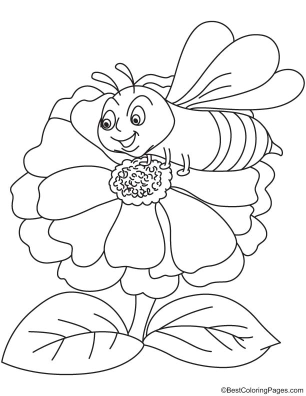 Zinnia attracts bee coloring page