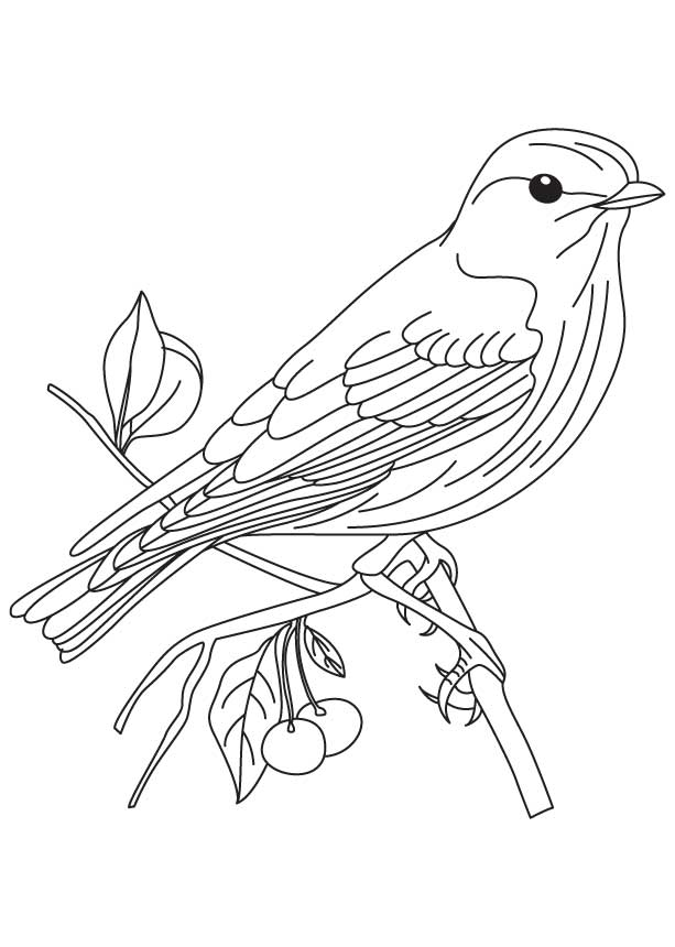 Eastern Bluebird Coloring Page Download Free