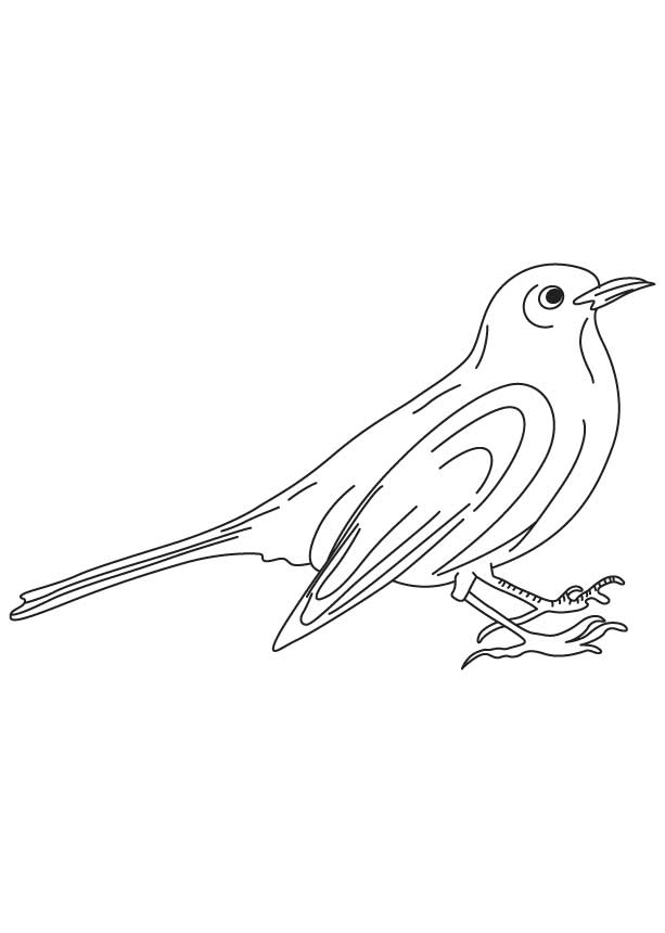 black bird coloring pages - photo#24